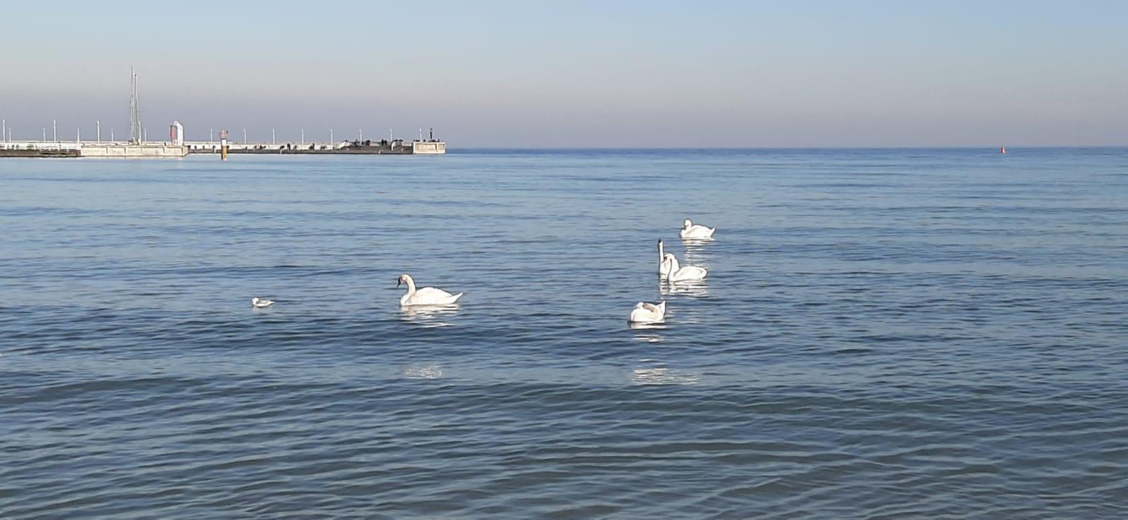 Step in Warsaw - Stadtführerin in Warschau. Vielen Dank dem Heiligen Valentin von Terni für ein schönes Wetter an der Ostsee.:) Ein Blick auf den Pier in Sopot und die Schwäne, 14.02.2020.
